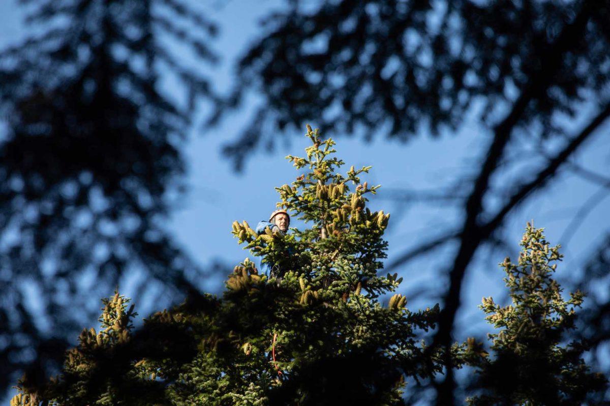 Das Klettern in 60 m hohen Bäumen stellt ganz besondere Anforderungen